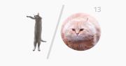 google_io_cats