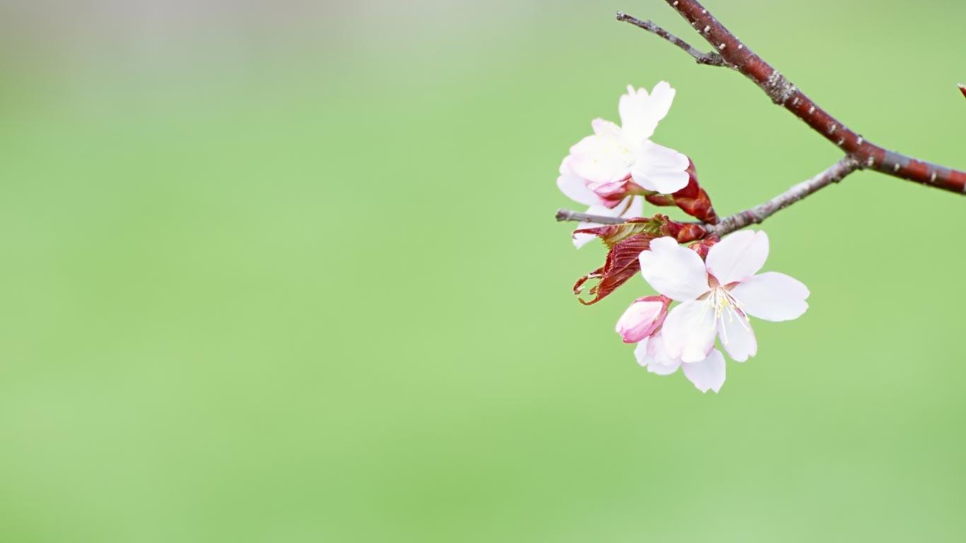 spring_wallpaper03