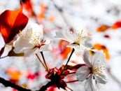 spring_wallpaper06