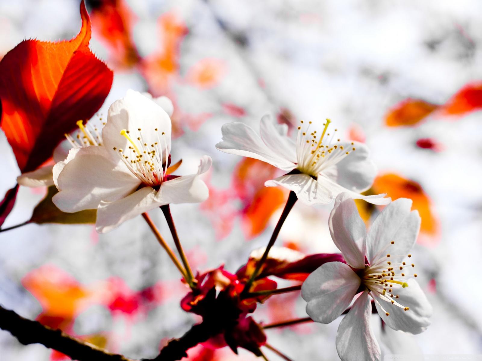 spring_wallpaper06