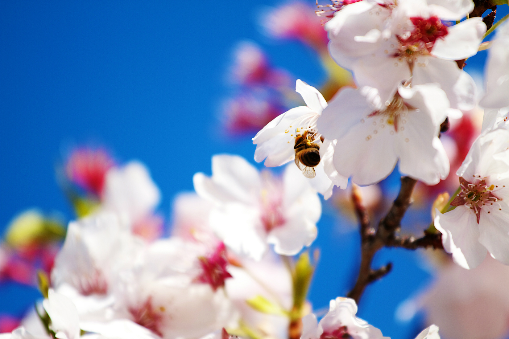 spring_wallpaper07
