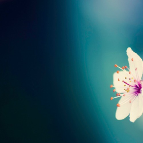 21 Android wallpapers for Spring 2013