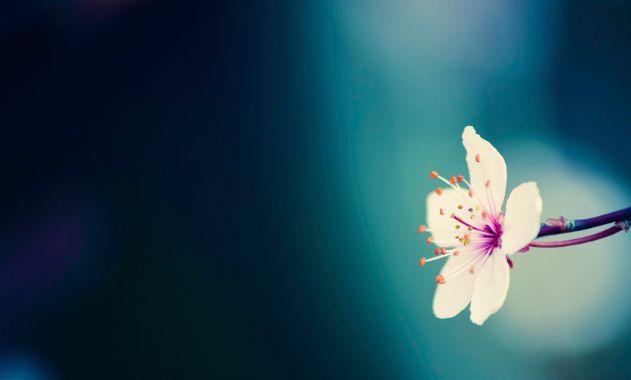 spring_wallpaper_720