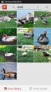 google_plus_photo_search_duck