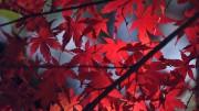 autumn14