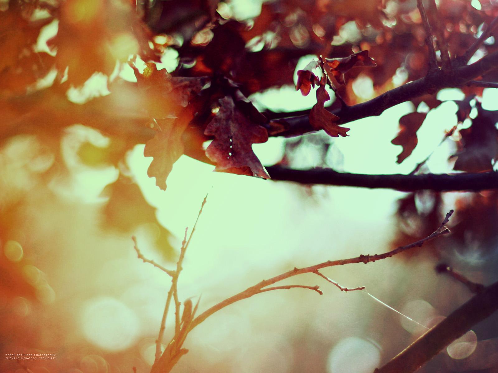 autumn16