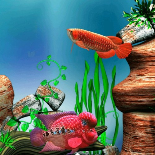 Arowana Fish 3D Live Wallpaper Review