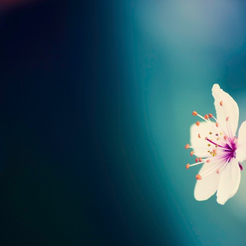 Amazing flower wallpapers to add a splash of color to your devices