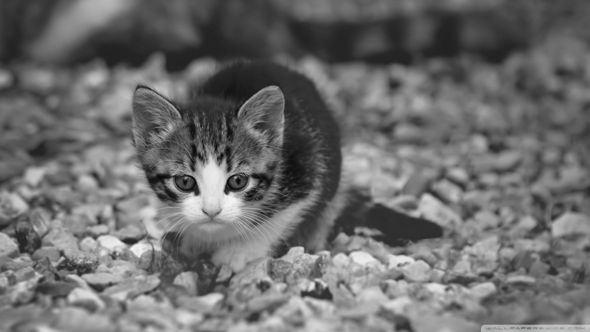 18 adorable kitty cat wallpapers - Kitten wallpaper ...