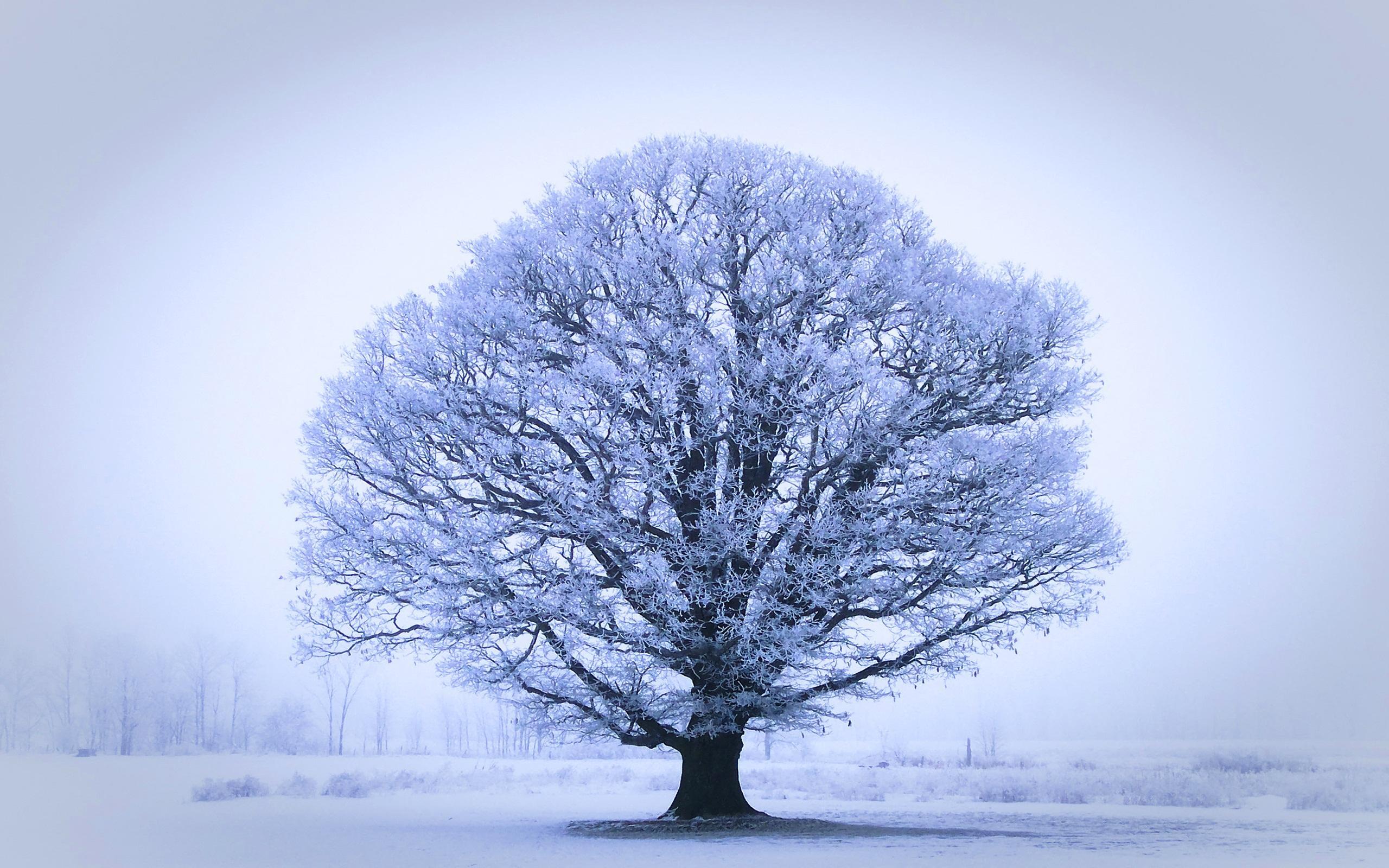 6838472-oak-tree