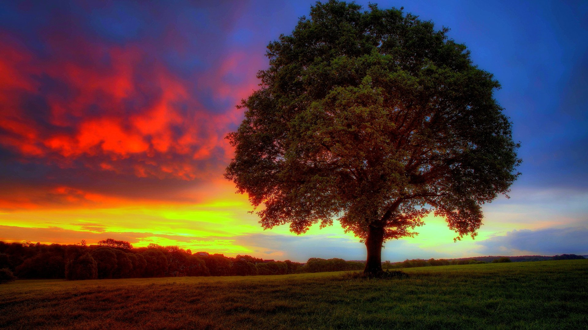 tree hd wallpapers - photo #14