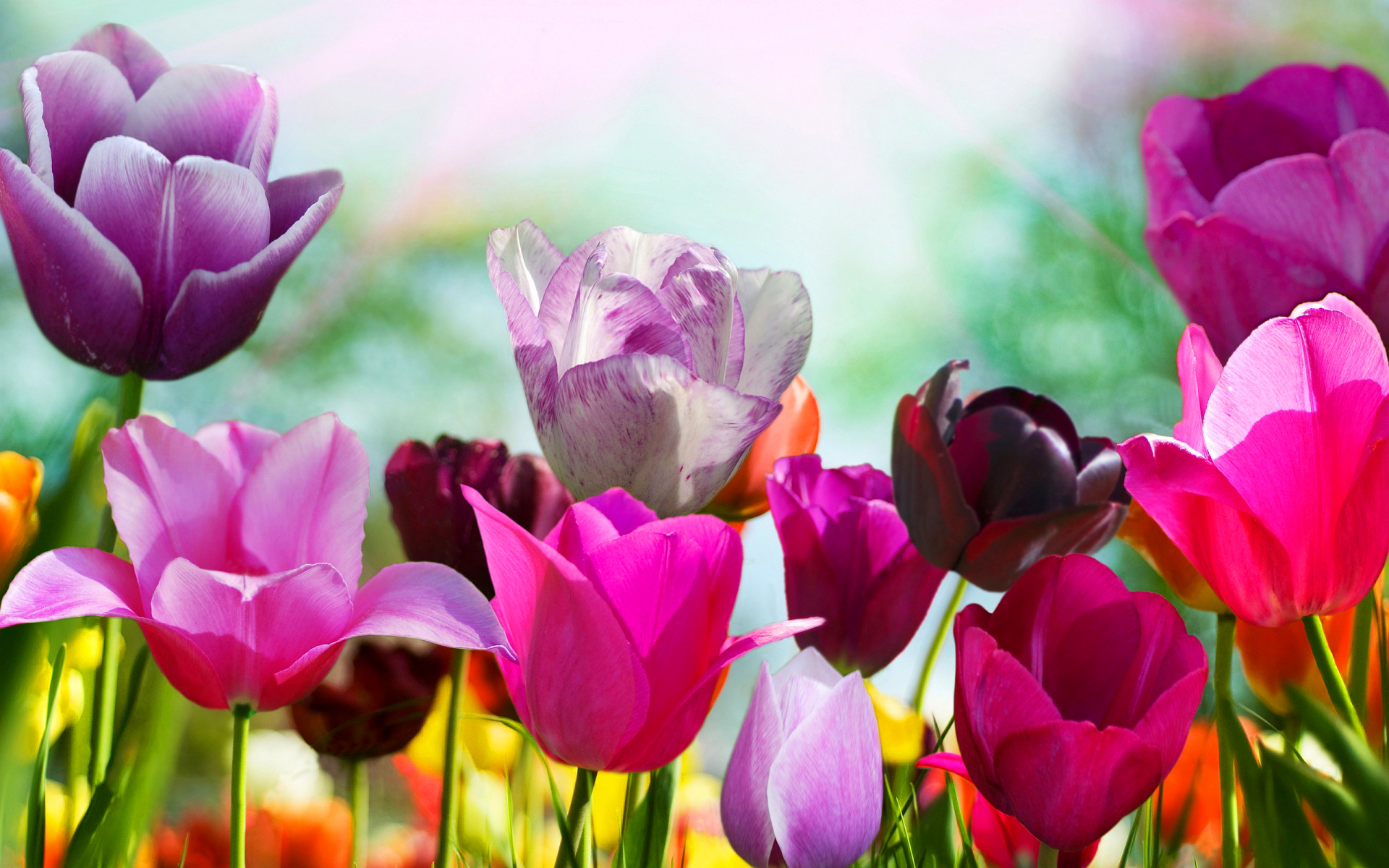 Spring Flower Background Images: Tired Of Winter? Get Ready For Spring With These 48 HD