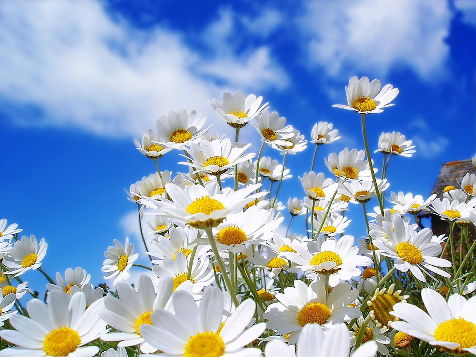 Tired Of Winter Get Ready For Spring With These 48 Hd Wallpapers