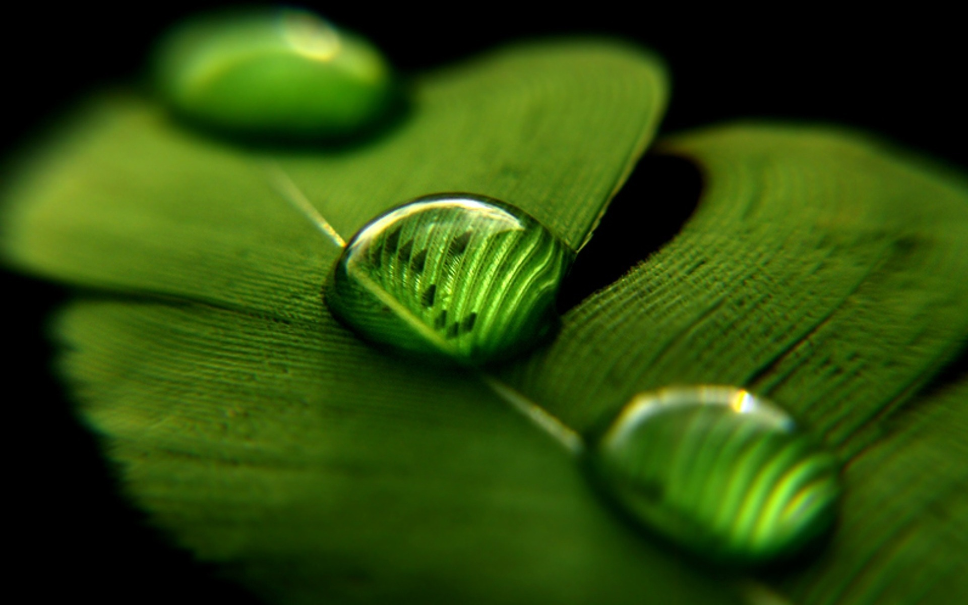 Desktop-Pen-Drops-Macro-Wallpaper