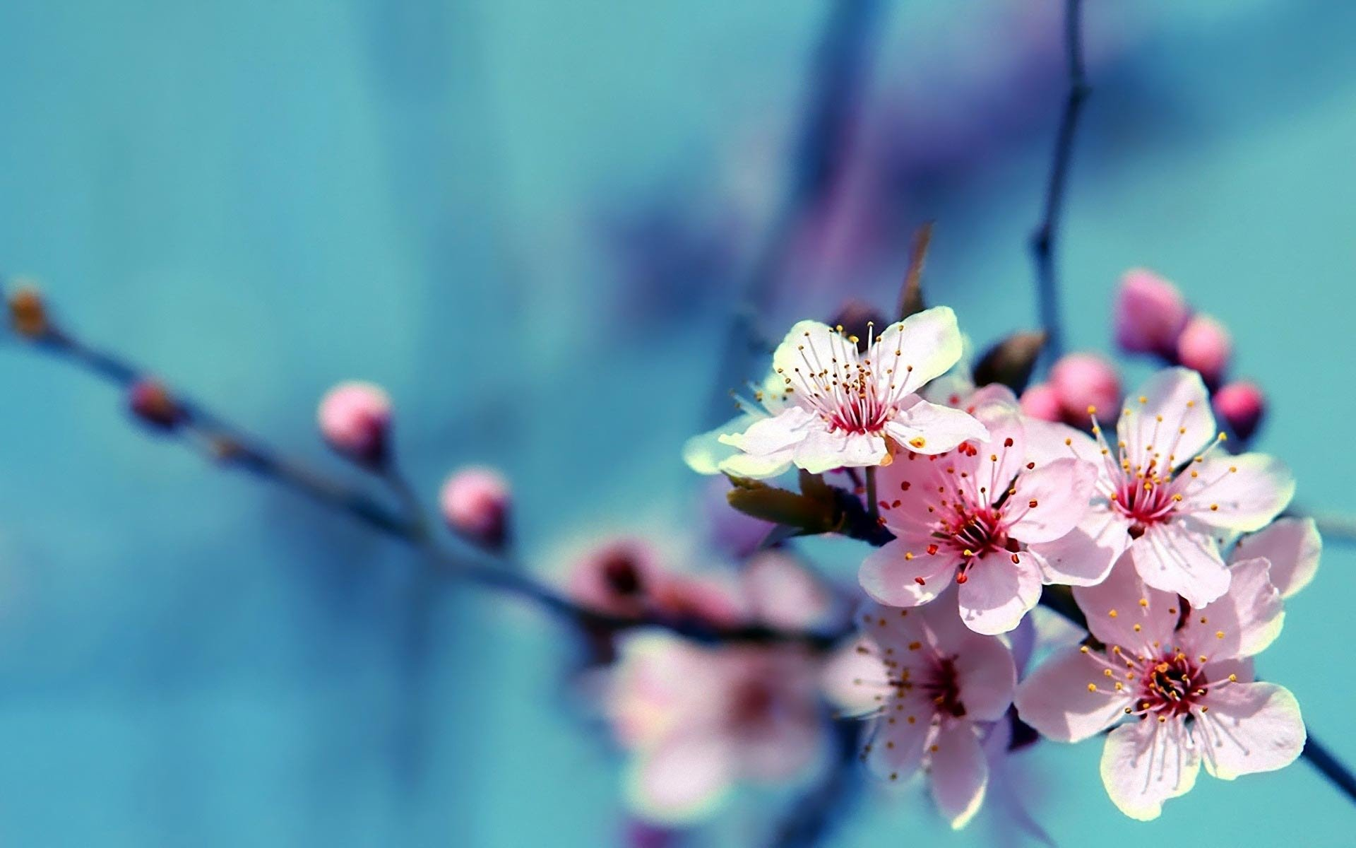 110 Amazing Hd Wallpapers Of Beautiful Flowers