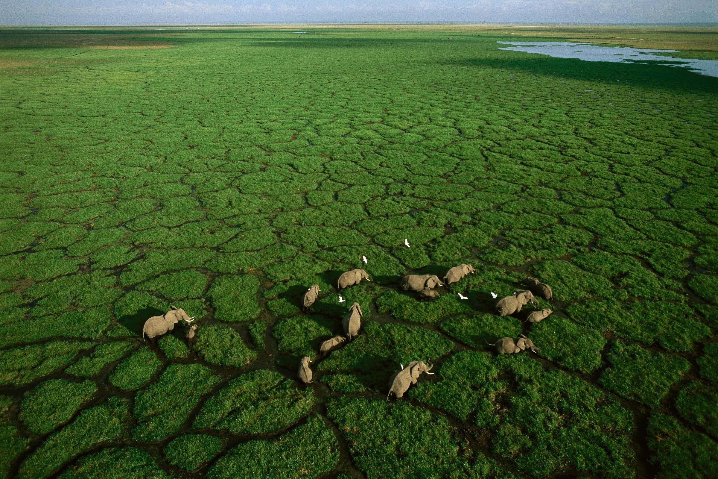 Africa Aerial Survey