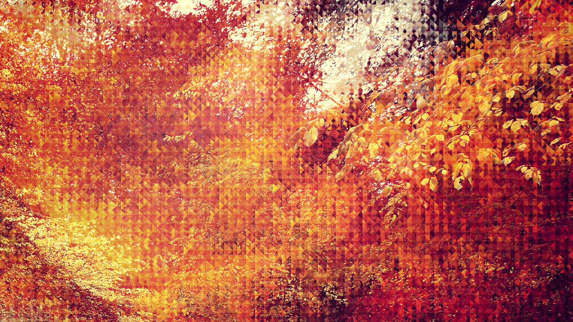 20 autumn wallpapers for your android