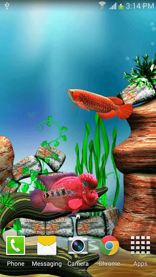 arowana fish 3d live wallpaper