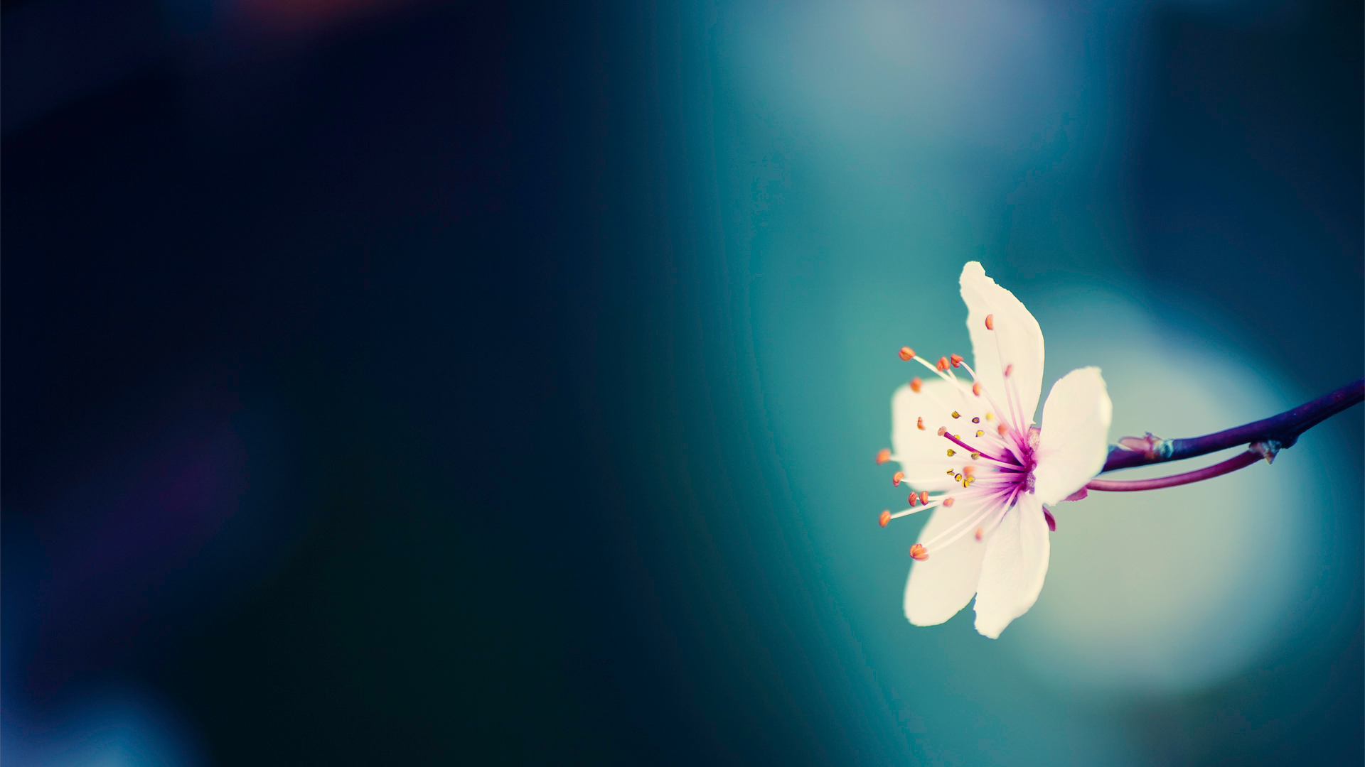 11 amazing flower wallpapers to add a splash of color to your devices mightylinksfo
