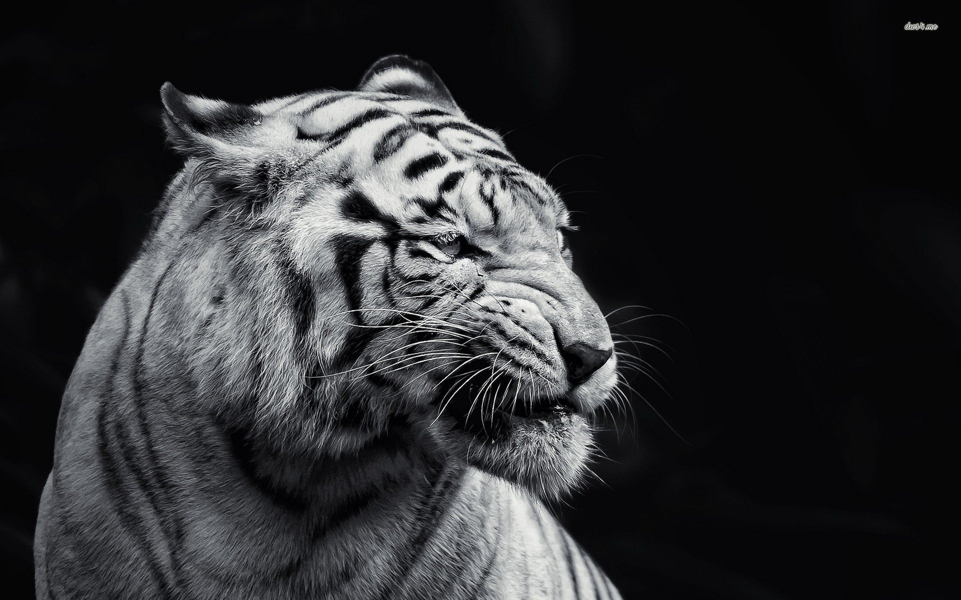 animal-wallpaper-black-and-white-innovative-with-photos-of-animal-wallpaper-wallpaper-on-gallery