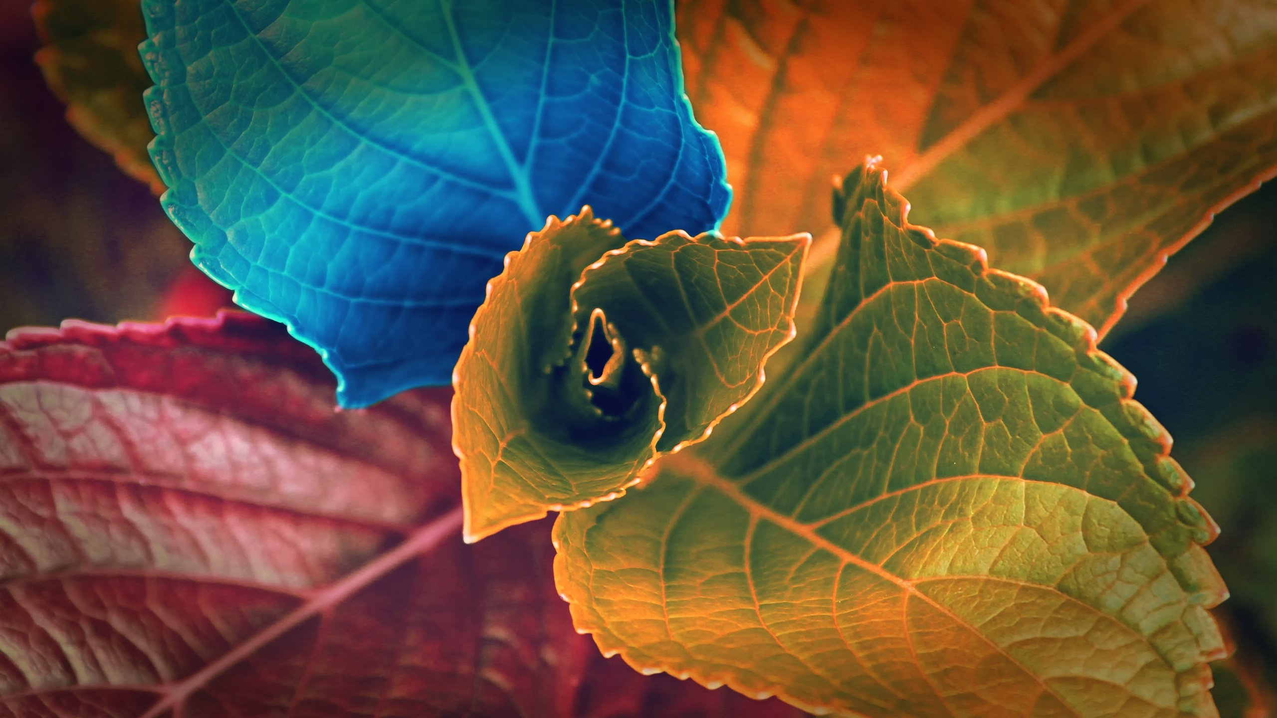 colors_of_leaves-2560x1440