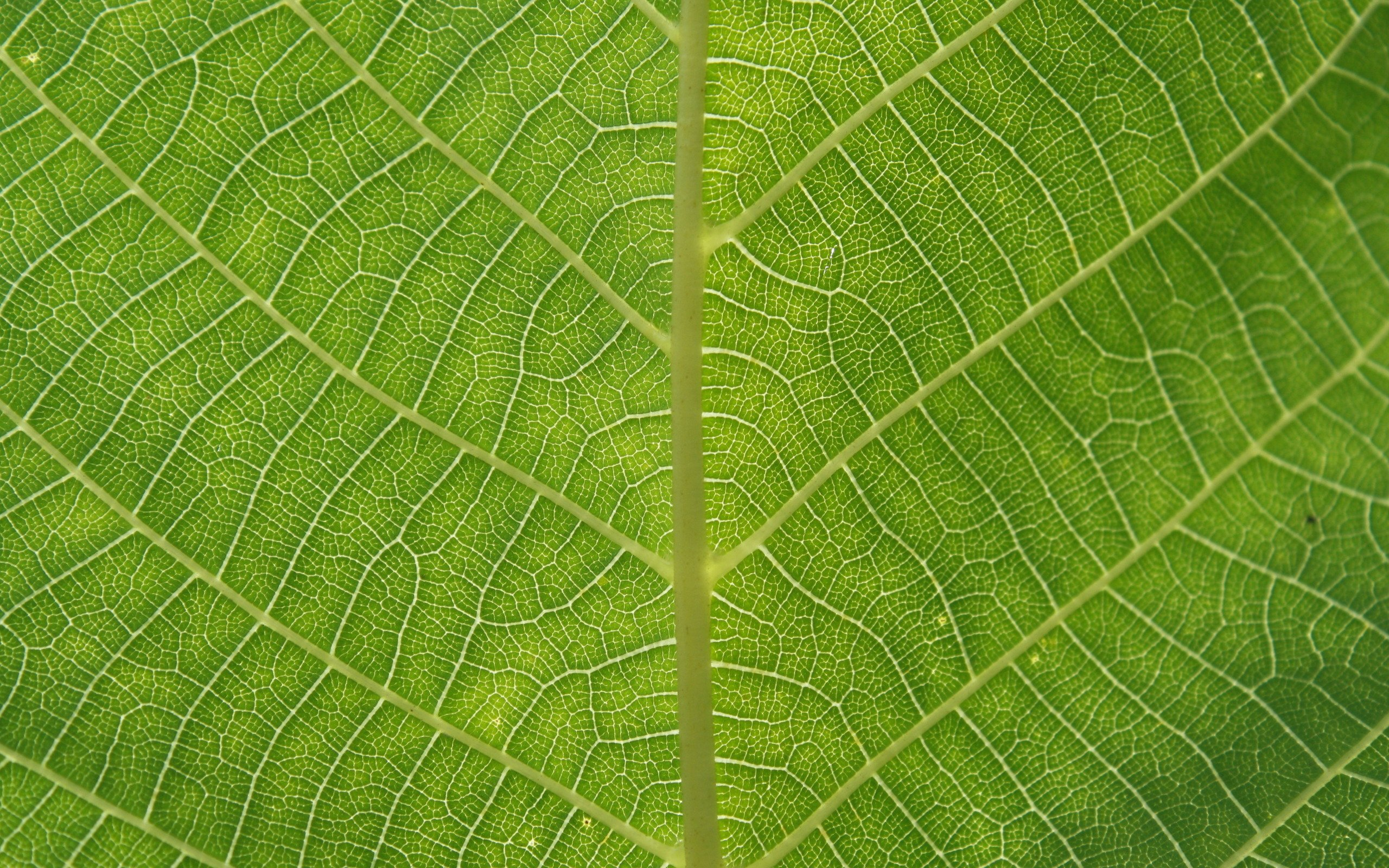 leaves-texture-background-8429-8752-hd-wallpapers
