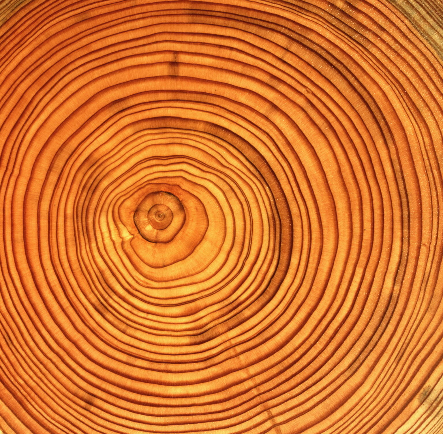 Tree trunk, cross section showing annual growth rings, full frame
