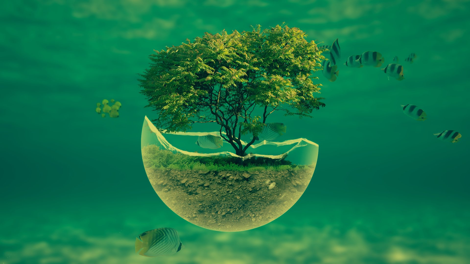 1920x1080-underwater-tree-widescreen-hd-abstract-desktop-wallpaper