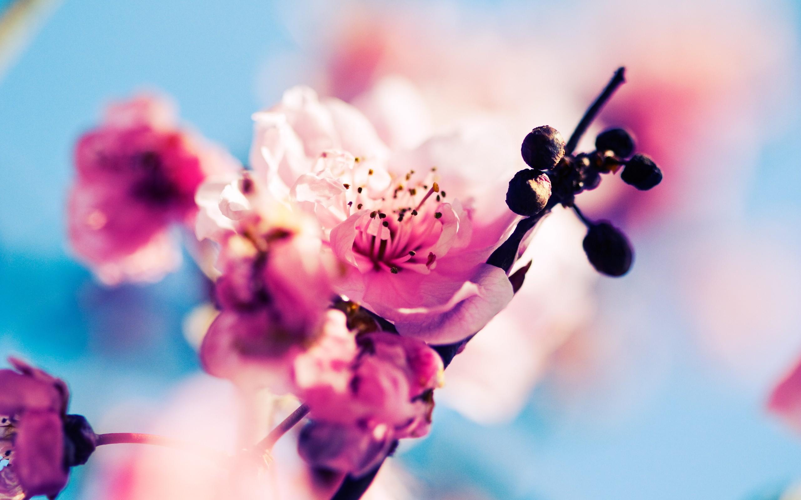 6848700-spring-wallpaper