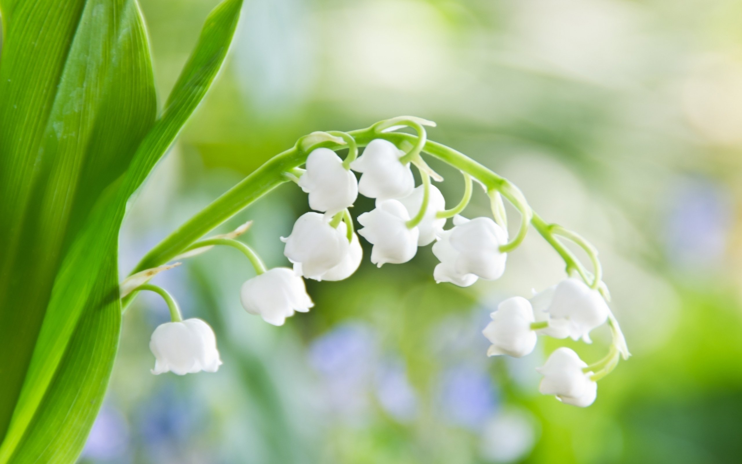 6970639-spring-beautiful