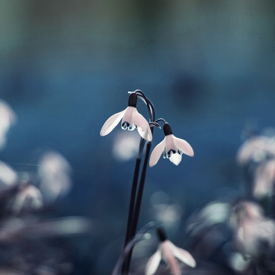 mp99-uknown-flower-blue-bokeh-nature-android-large