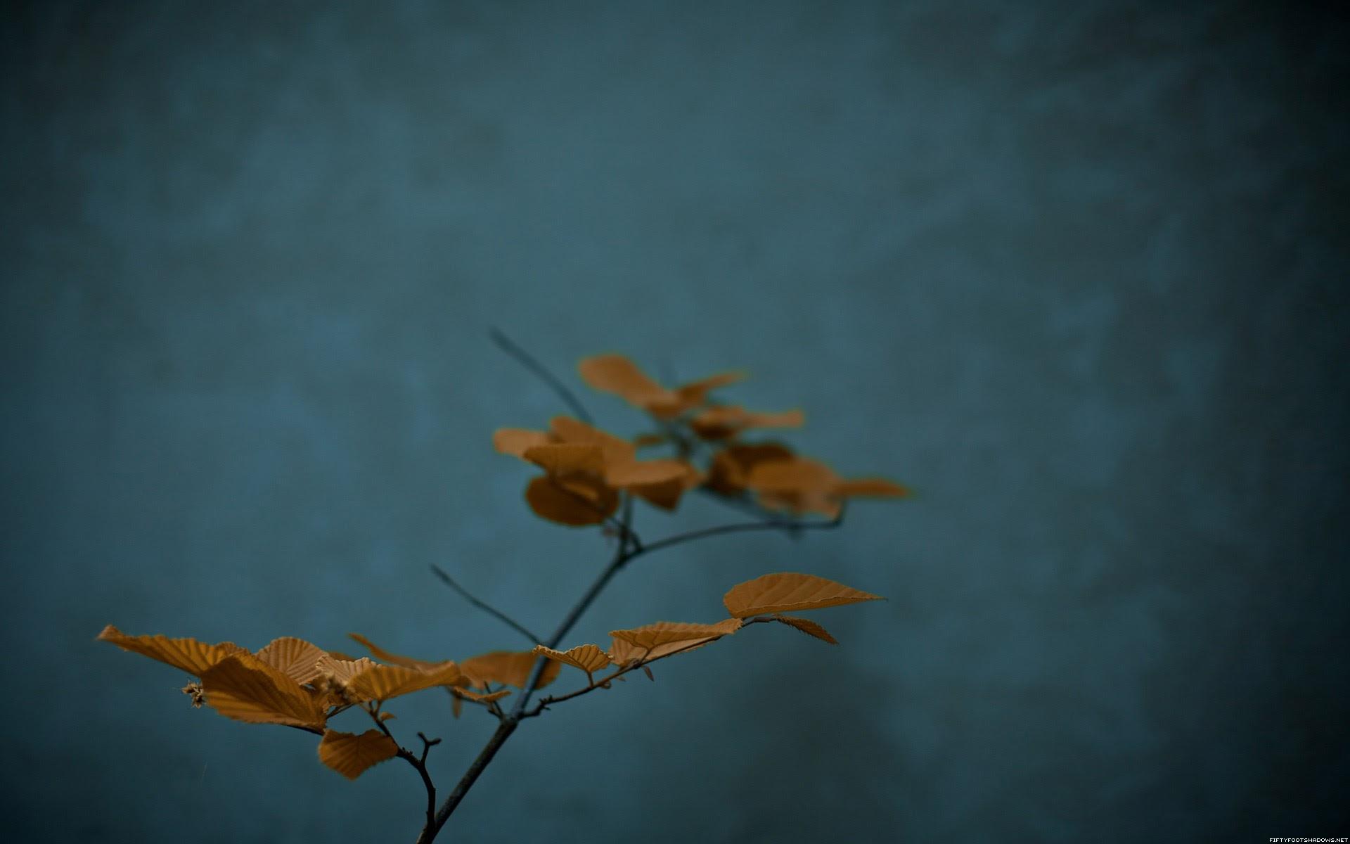 6965739-zen-plants