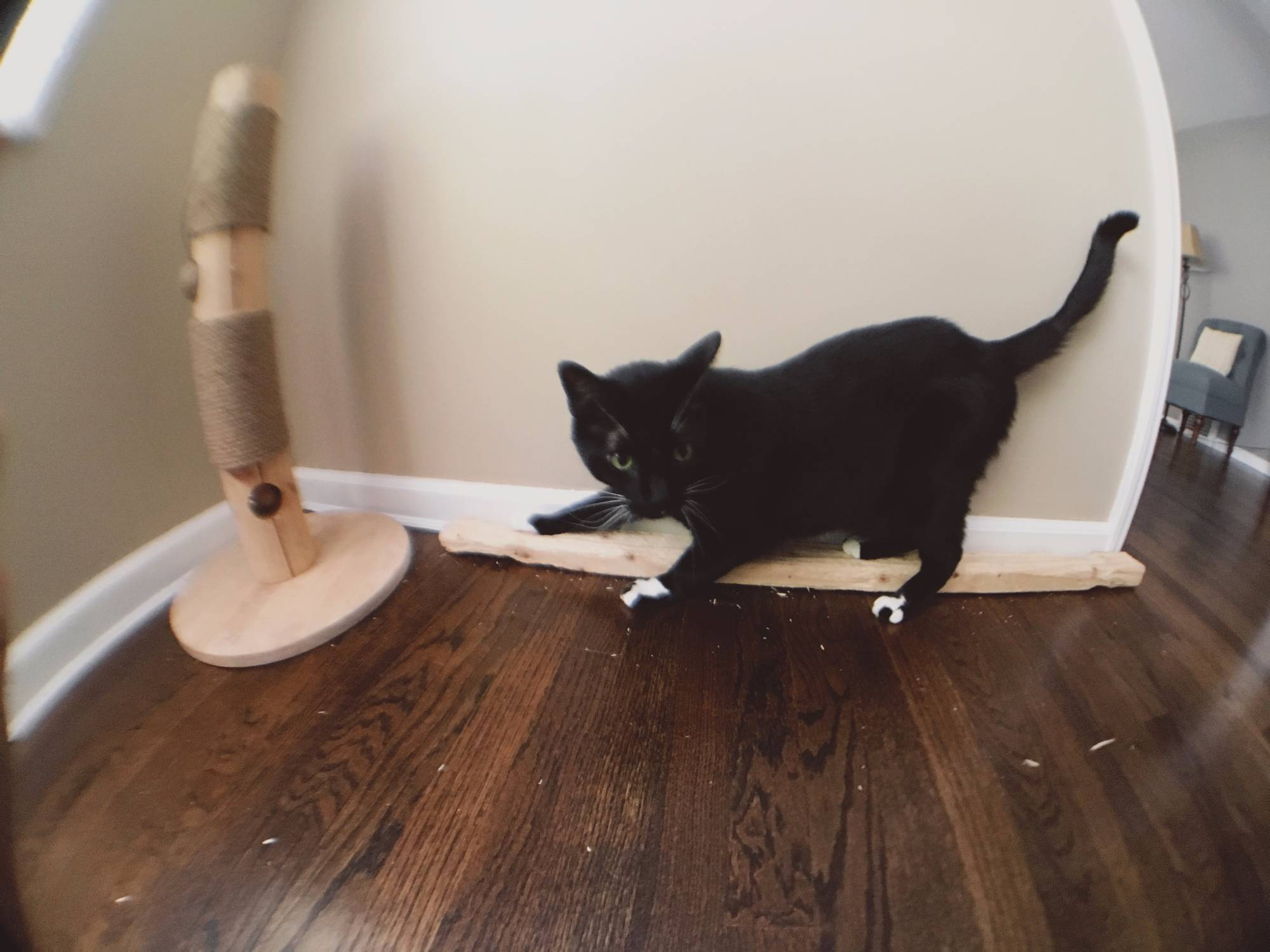superwideangle cat