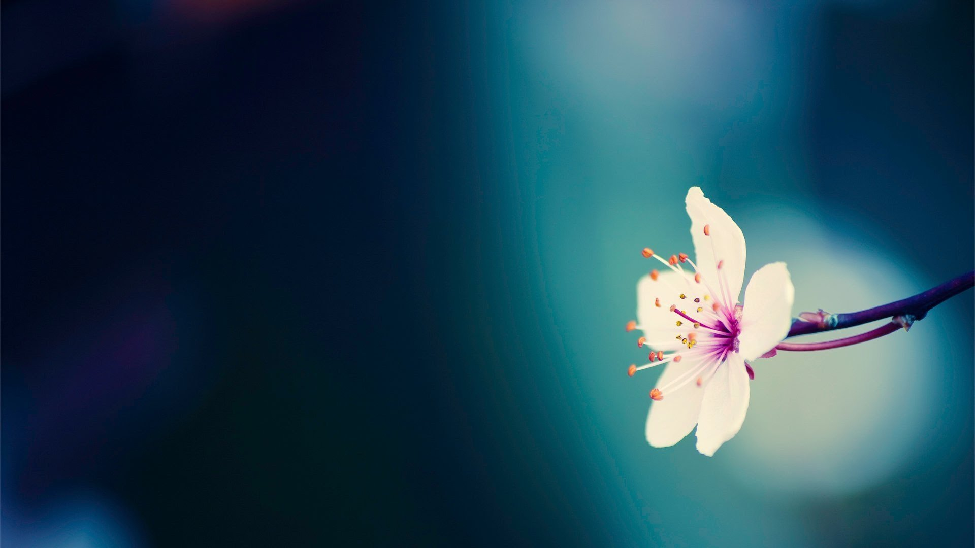 177-spring-background